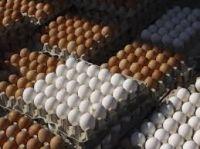 Ostrich egg, Fresh Chicken ...