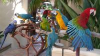 Exotic Birds,Parrots and Pa...