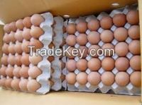 Fresh Chicken Eggs / Fresh ...